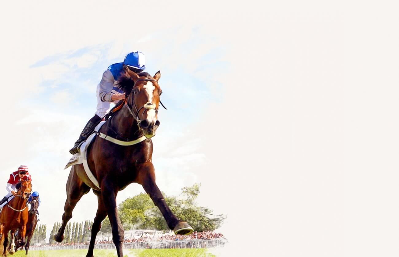 Course chevaux plat deauville